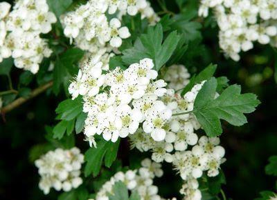 الزهور البيضاء احلى يكون