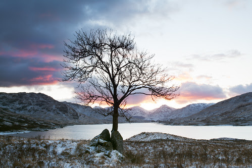 Arklet Tree - Sunset by svensl