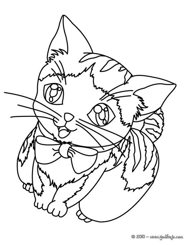 Dibujos Para Colorear Gatito Hermoso Eshellokidscom
