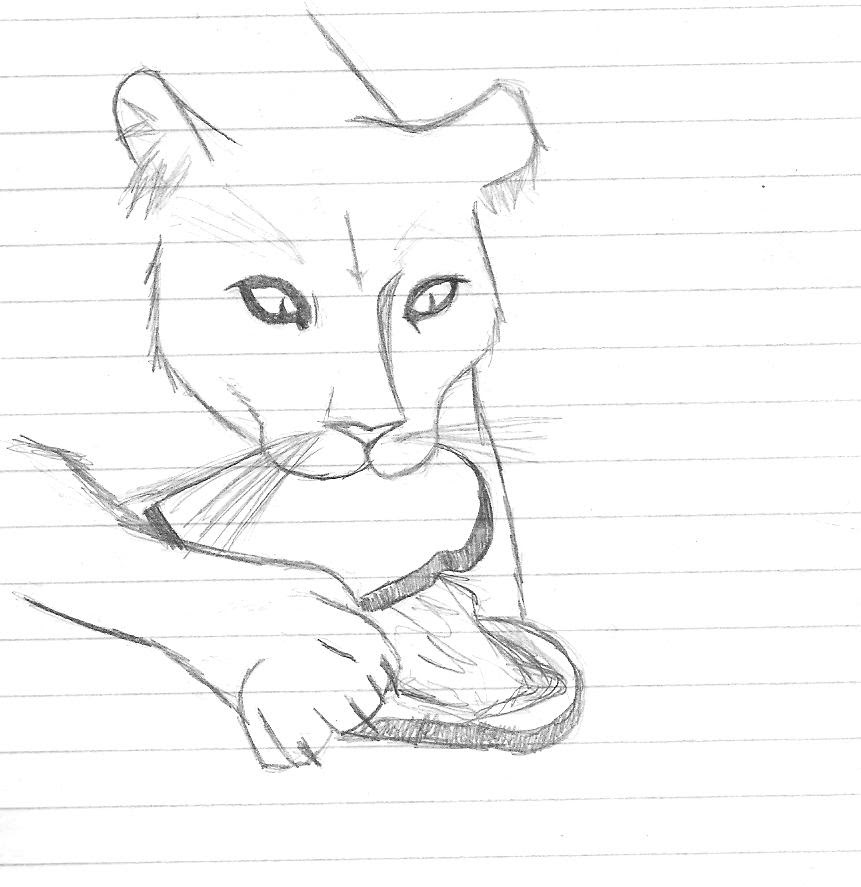 How To Draw A Mountain Lion Step By Step Easy