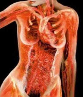 Imágenes del cuerpo humano transparente