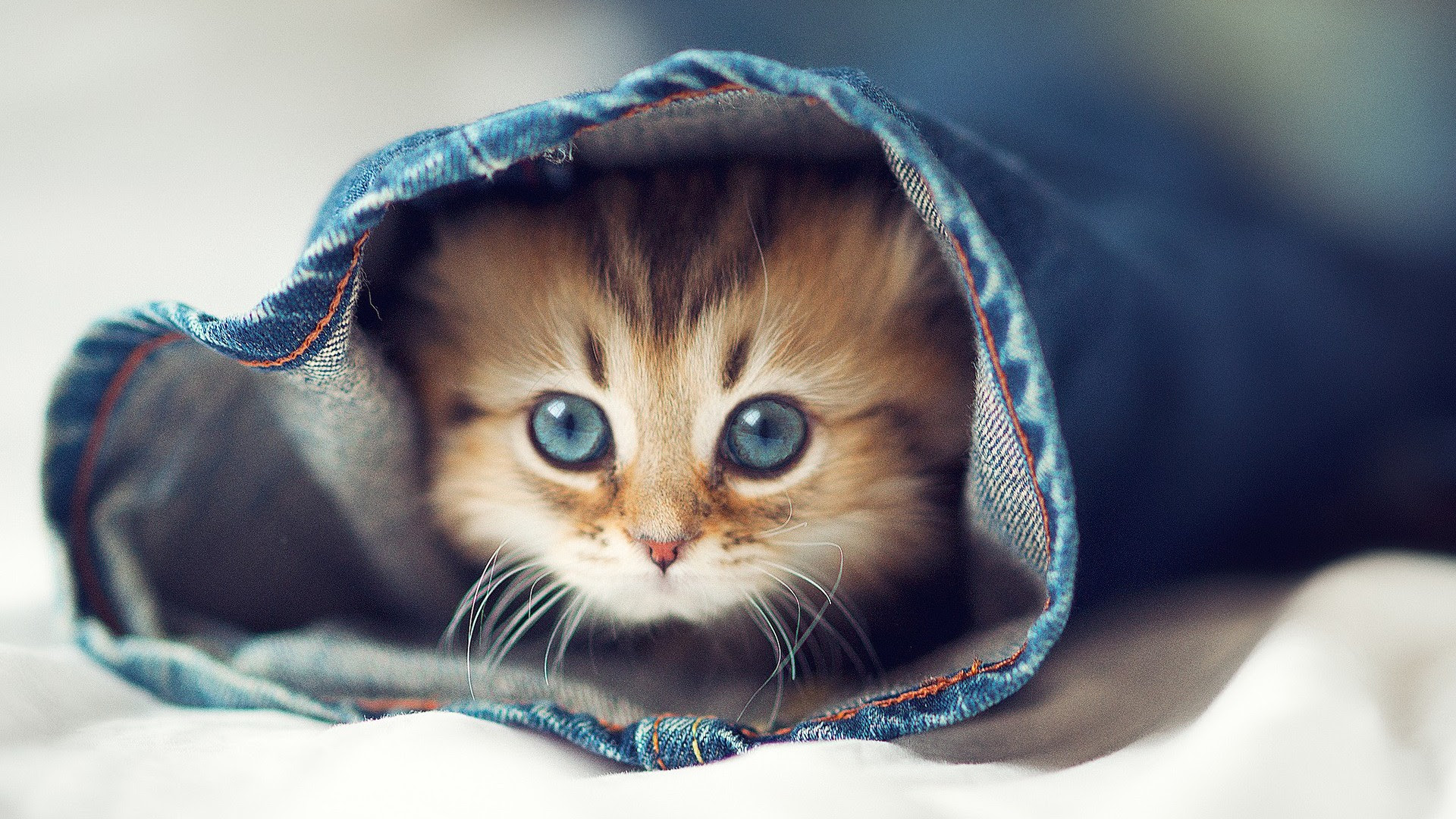 A Cute Cat Wallpaper