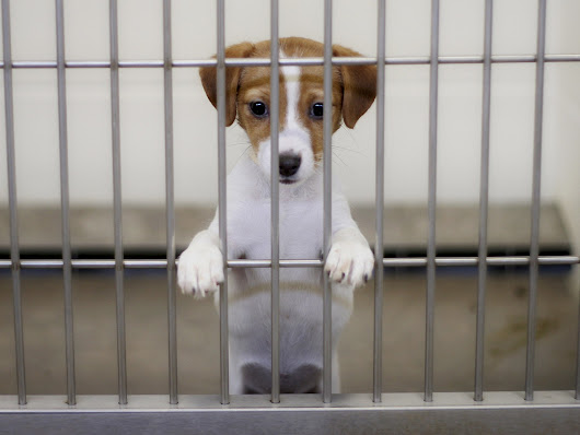 San Francisco brings in law forcing all pet shops to only sell rescue dogs