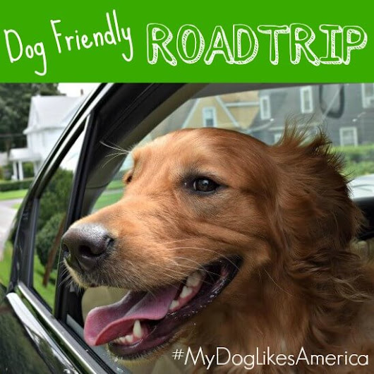 2016 Dog Friendly Road Trip Leaderboard Contest - MyDogLikes