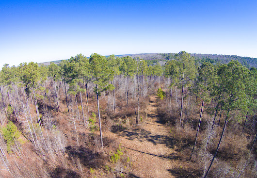 29 Acres at Cortez Morison Road near Lillington in Harnett County NC | Legacy Farms and Ranches North Carolina