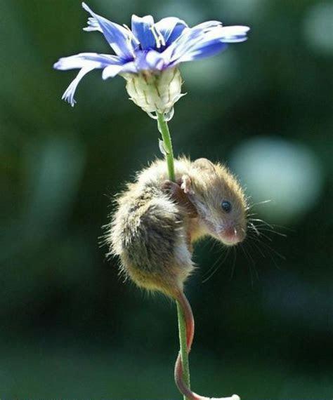 Eek! A Mouse! ? Cute Overload