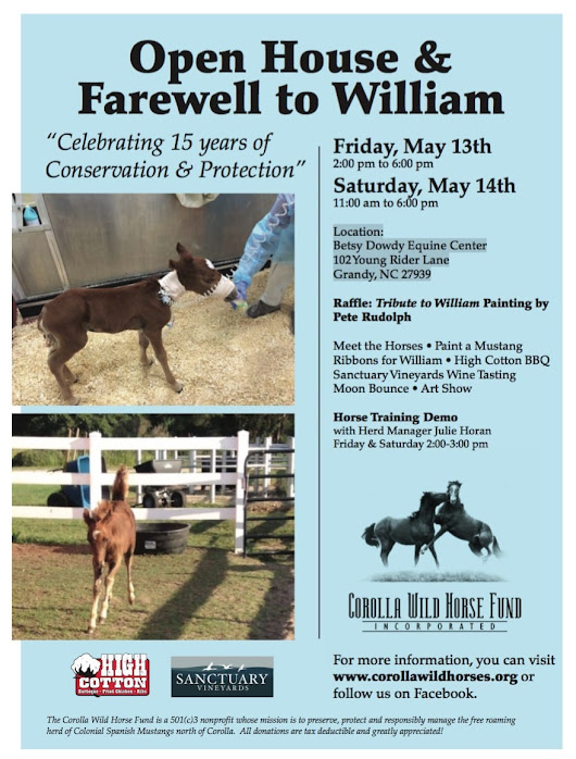 Corolla Wild Horse Fund |   Open House & Farewell to William