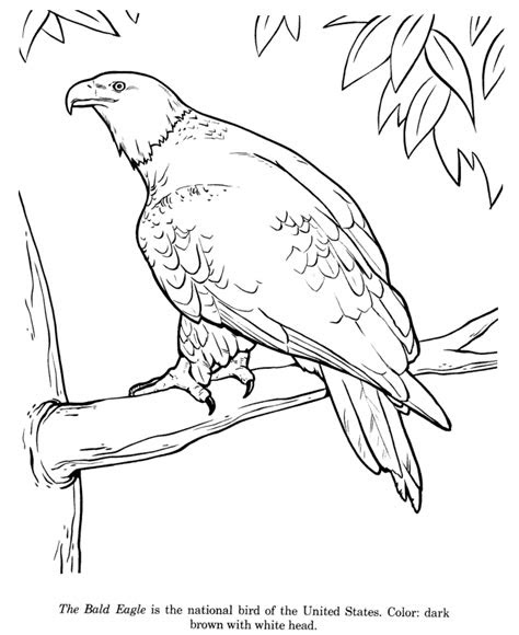 animal drawings coloring pages bald eagle bird