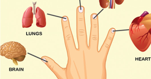 Each Finger Is Connected With Two Organs, This Japanese Healing Method can Provide Fast Pain Relief