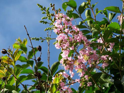 hotweatherflowers1