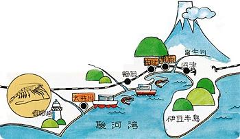 大井川港発駿河湾桜えびしらす桜えびって
