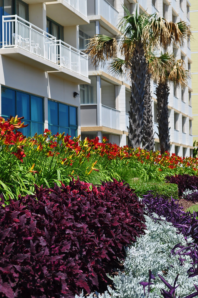 Hotel Landscaping (7)