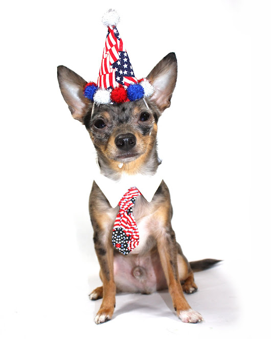 Tips for July 4th Pet Safety - VetnCare
