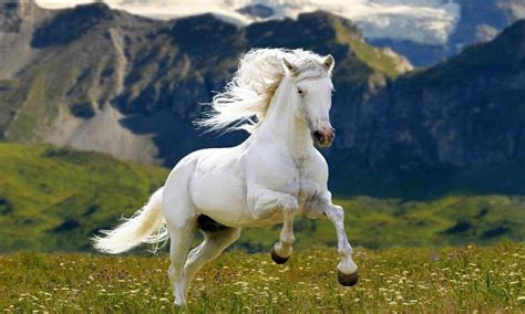 white horse meadow grass mountains hd wallpaper
