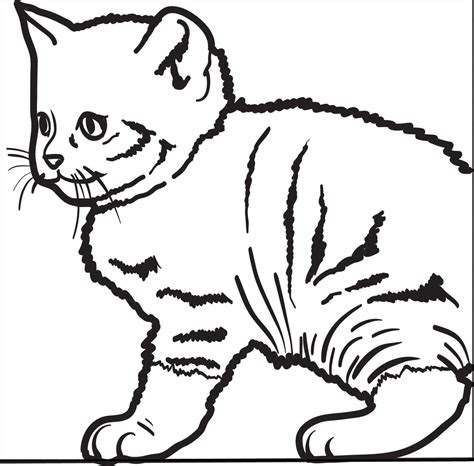 printable cute kitty cat coloring page  kids