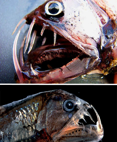 01_viperfish-bizarre-animal
