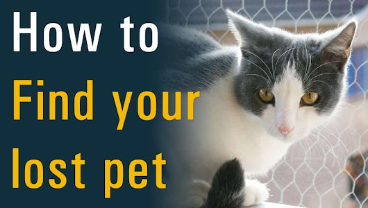 Be your own pet detective: How to find your lost pet