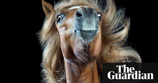 The mane attraction: hair-tossing horses – in pictures | Art and design | The Guardian