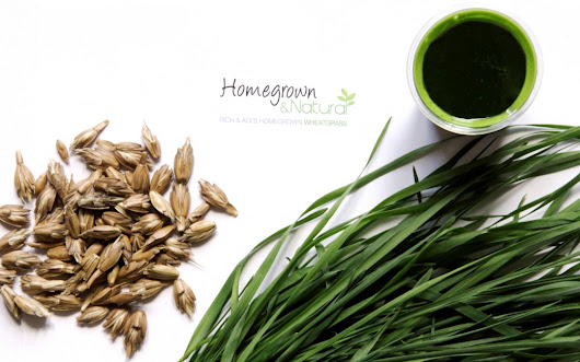 Spelt vs. wheatgrass | The Wheatgrass Health Blog |