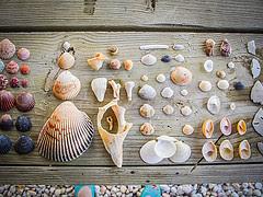 Shells, organized neatly