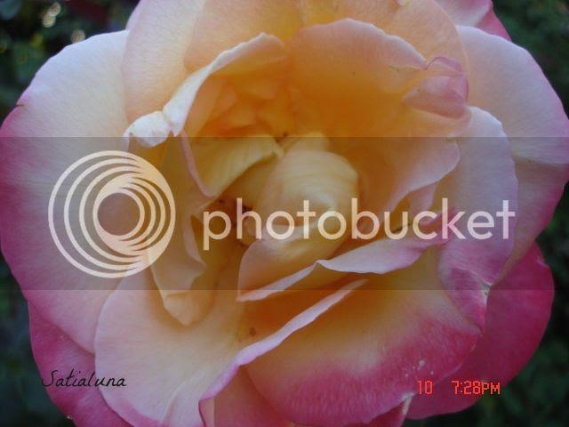 photo 8de71f54-c47a-40ff-923d-6a86c4a11851.jpg