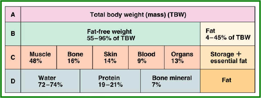 body fat percentage waist to height