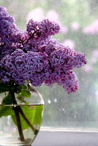 lilacs at window