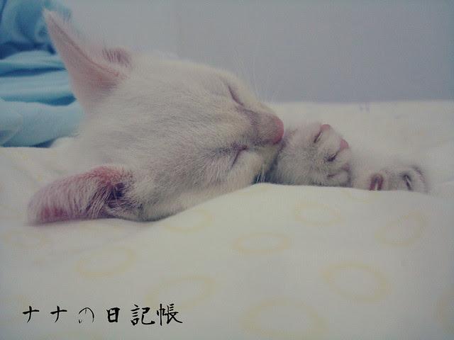 眠る - ねむる