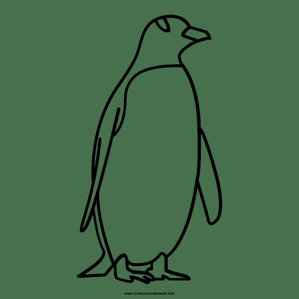 Pinguino Disegni Da Colorare