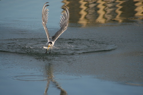 "July photo swap ""in Motion"" Turn fishing"