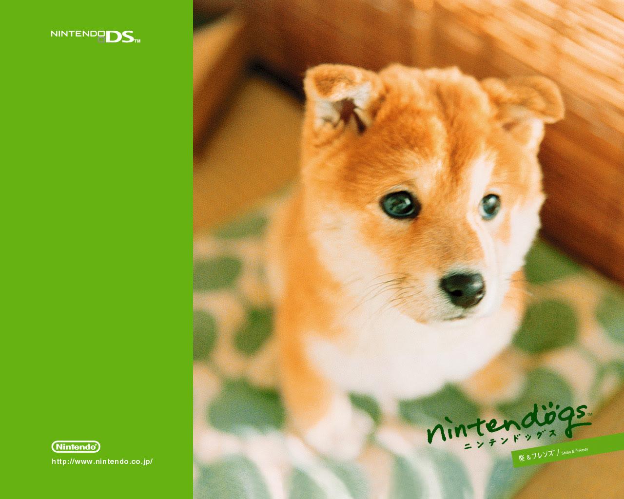 かわいい癒される 柴犬 Shiba Inu Pcデスクトップ壁紙 Iphoneスマホ