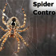 Spider Control: How to Get Rid of Spiders in the House – PestWorld
