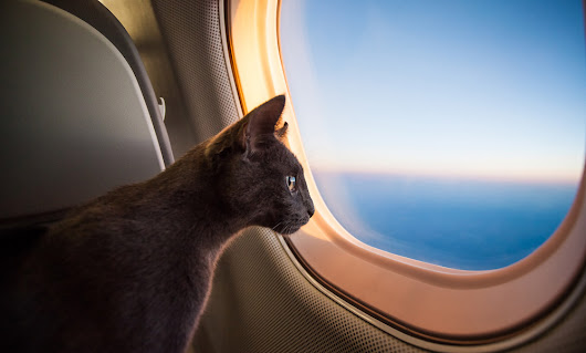 Travellers can now monitor, live stream and call pets while flying