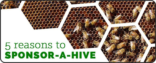 5 Reasons to Sponsor-A-Hive Today -