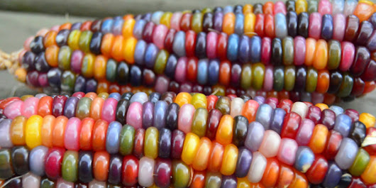 """Glass Gem"" Rainbow Corn Is the Most Beautiful Vegetable of All Time"