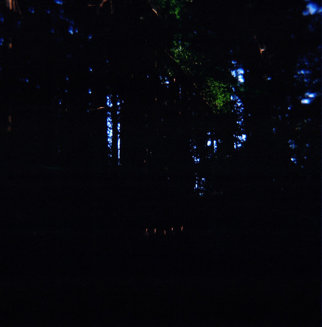 People in the forest