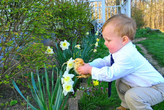My nephew helping his pet chicken, Biscuit, smell a flower. - Imgur