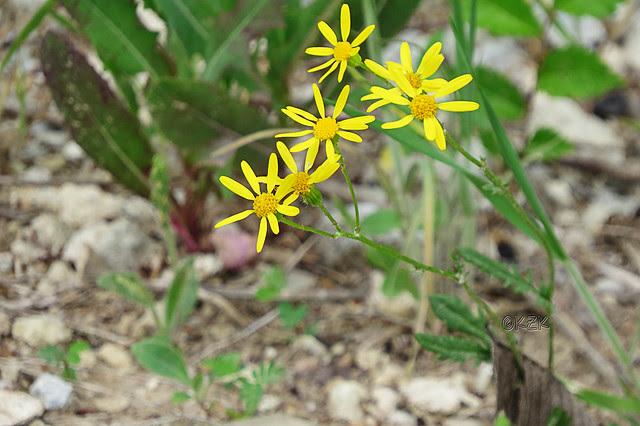 IMG_3795Wildflowers