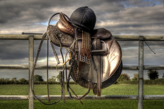 Become a Horse Whisperer with the Right Kind of Horse Tack - Editors Top