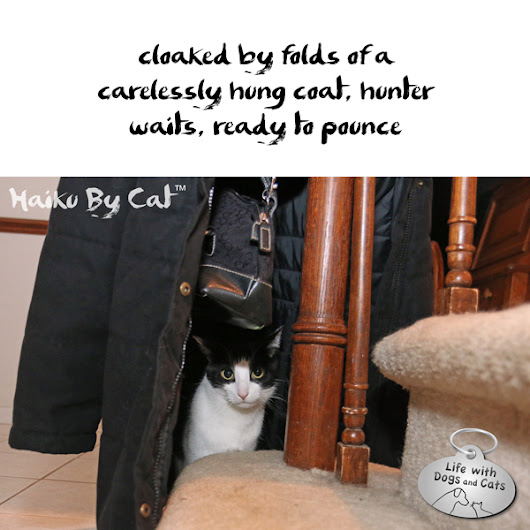 Haiku by Cat: Cloak - Life with Dogs and Cats