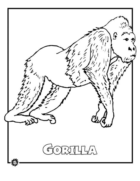 gorilla colouring  rainforest study pinterest