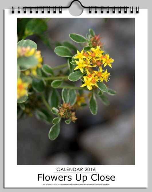 2016 Wall Calendar  Flowers Close Up by ErinKohlenbergPhoto