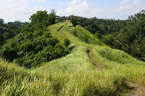 Campuhan ridge