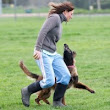 Competition Dog Sports Etiquette