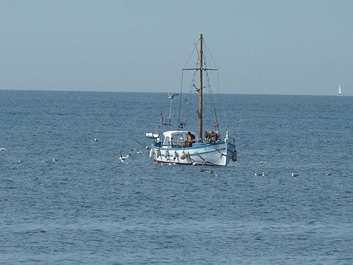 mouettes et pêcheur.jpg