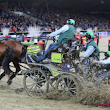 World Cup four-in-hand driving for the 14th time in Mechelen! - News - Jumping Mechelen