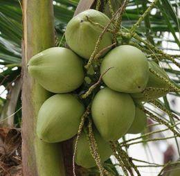 Coconut Water Benefits - Low in Sugar