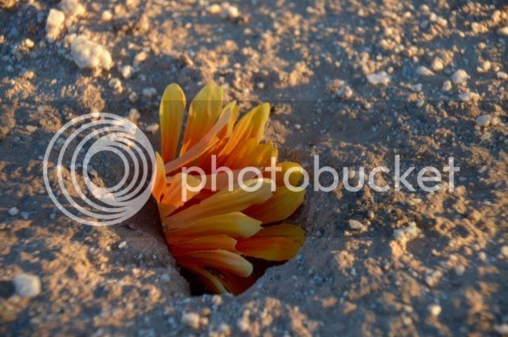 Cemetery debris photo DSC_0031_zpsnbaktjof.jpg