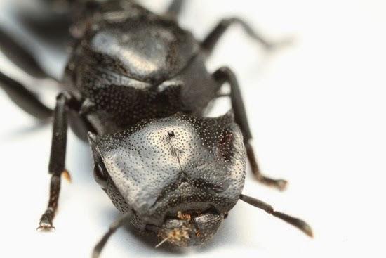 perierga.gr - 5 παράξενα έντομα με απίθανη εμφάνιση!