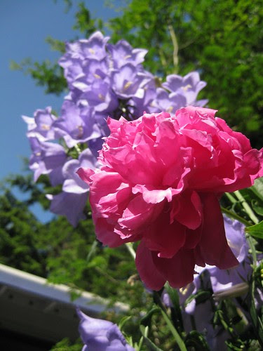 Red & Purple Flowers